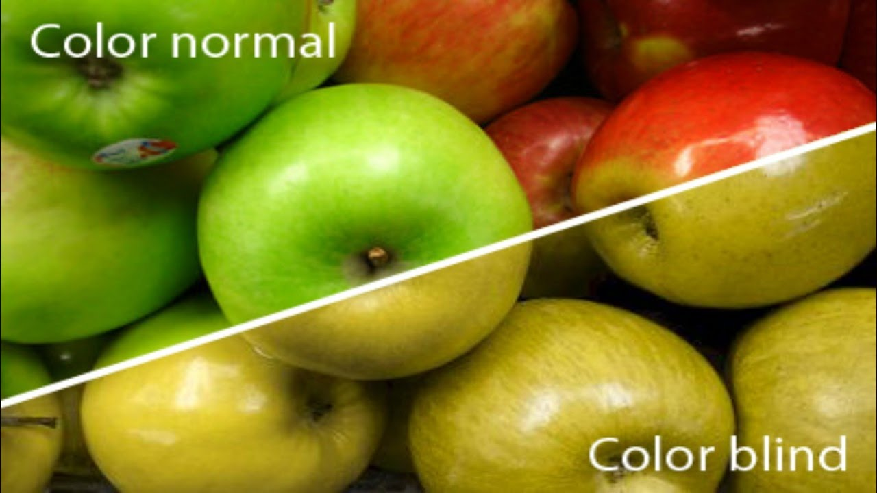 Color Blind Test How To Figure Out If You Are Color Blind