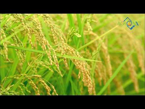 AgroNxt Crop problem solver tool ।अपनी फसलों की समस्या का करें खुद समाधान।