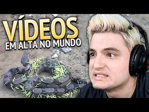 REAGINDO A VÍDEOS EM ALTA PELO MUNDO!