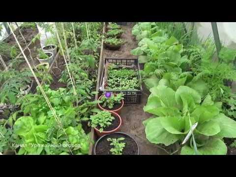 Вопрос: Какие овощные культуры нельзя сажать в теплице?