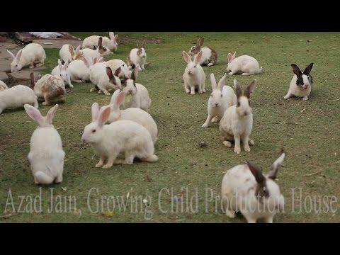 Cute Animal Rabbits as Pets Video | Rabbit Farming in India | Indian Rabbit | ढेर सारे खरगोश