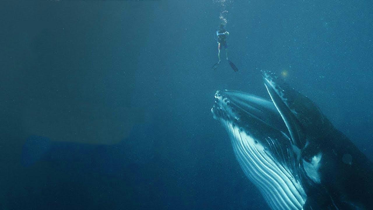 Что если Вас ПРОГЛОТИТ кит