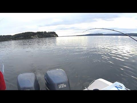 Puget Sound King Salmon Fishing