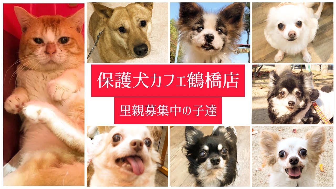 里親 東京 犬