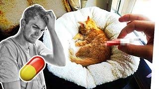 Die Baby Katzen sind krank...