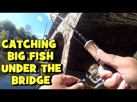 catching-big-fish-under-a-bridge!-(revenge-on-the-creek)