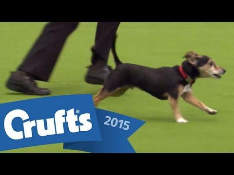 Agility - Kennel Club Novice - Cup Final | Crufts 2015