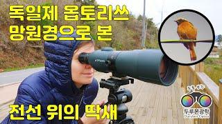 독일제 옵토리쓰 망원경을 이용하여 뒷뜰에서 촬영된 딱새…