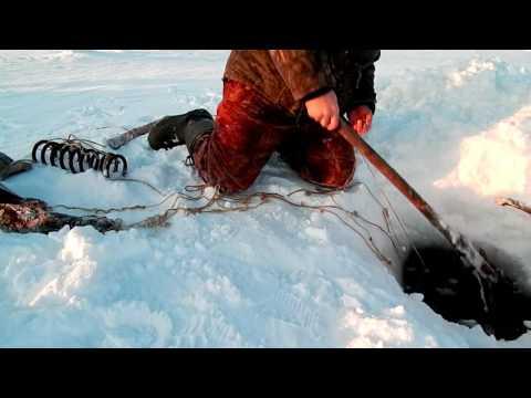 рыбалка на севере свежее