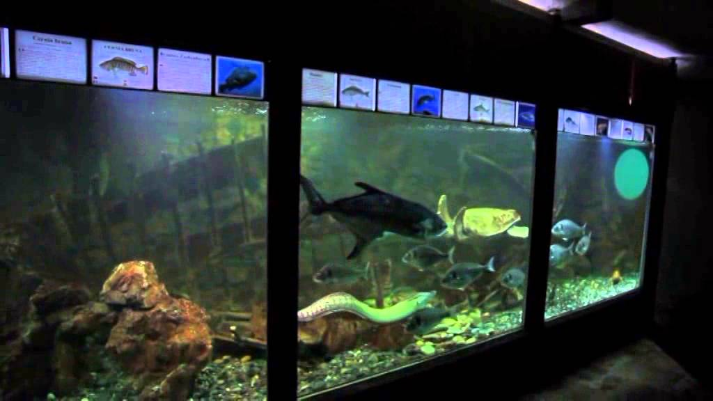 Charlie la tartaruga dell 39 acquario dell 39 elba youtube for Acquario x tartarughe
