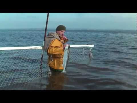Haaf Netting on the Solway - August, 2011 (Full Version)