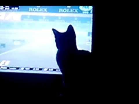 Indiana mirando F1