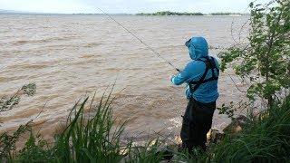 Первый выезд на Волгу за Лещём. Рыбалка на Донку 2019. Лещ, Карась, Голавль, Густера, Плотва