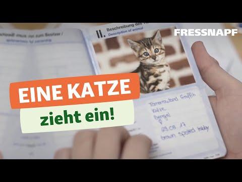 4 Tipps zum Katzeneinzug | Planung, Gesundheit, Sicherheit & Ausrüstung
