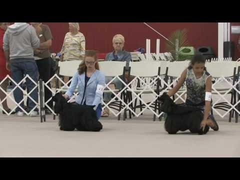 2017 ASC Cocker Spaniel Junior Showmanship Competition!