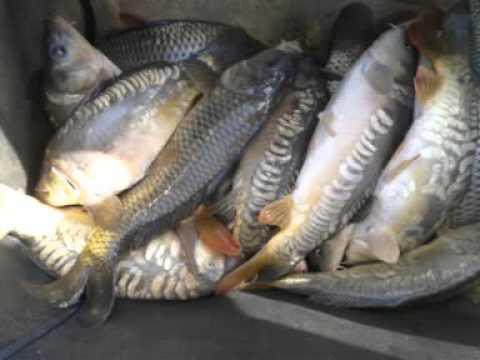fishing year 2015