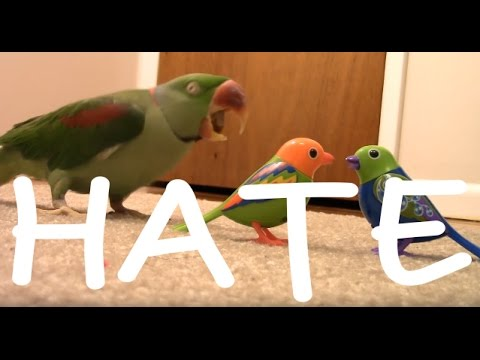 Real Bird's Reaction to Digibirds HATE & FUNNY COMMENTS