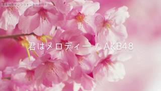 【KORG Pa900】君はメロディー - AKB48【被せてみた】 Mp3
