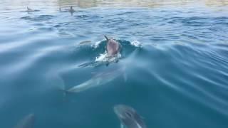 Крым. Дельфины атакуют!!!