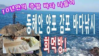 10년만에 주말 동해안 바다낚시 자연산회 먹방 양포 감…