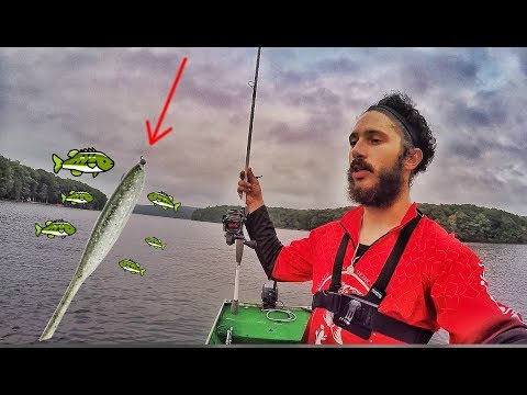 The BAIT Of The YEAR! Deep Creek Lake BASS FISHING! (SURPRISE CATCH!)
