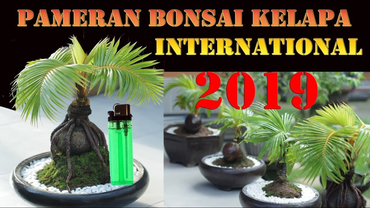 Pameran Bonsai Kelapa International Di Bali 2019 Youtube