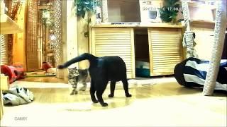 Котенок, девочка, в добрые руки! Мама котенка в добрые руки!