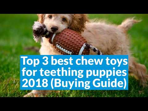 Top 3 Best Chew Toys For Teething Puppies 2018 Buying Guide Youtube