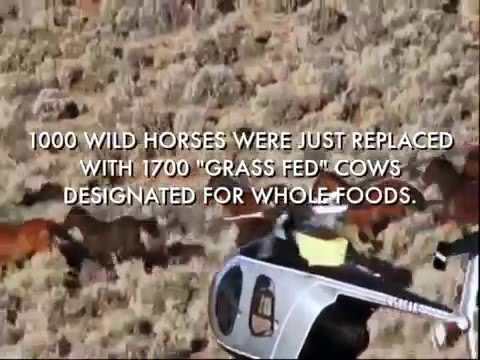 "Whole Foods ""ethically-sourced"" beef supplier destroys 1000 wild horses."