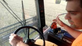 maksym harvesting winter wheat with combine case ih 2388