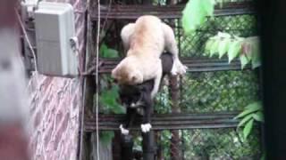 Cat Sex HD