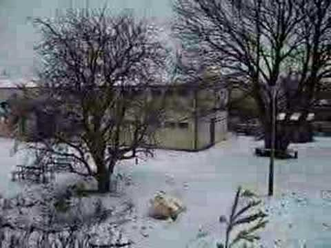 Snowy Wildlife Haven