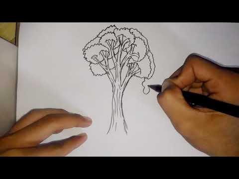 Tips Tes Psikologi Tes Gambar Pohon, Psikotes    Psychological Test Tips Test Tree Images