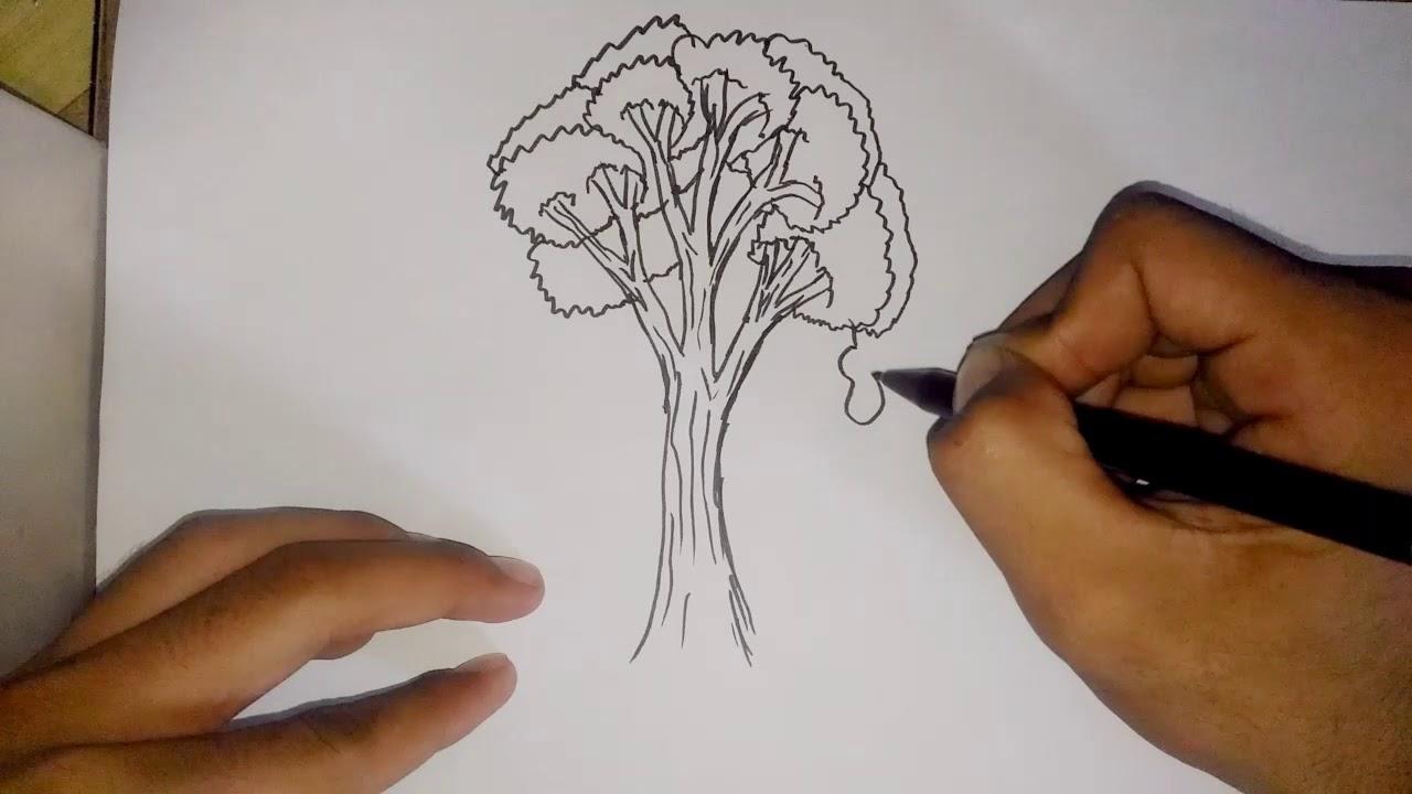 Contoh Soal Cpns Tips Dan Trik Cara Menggambar Pohon Dan