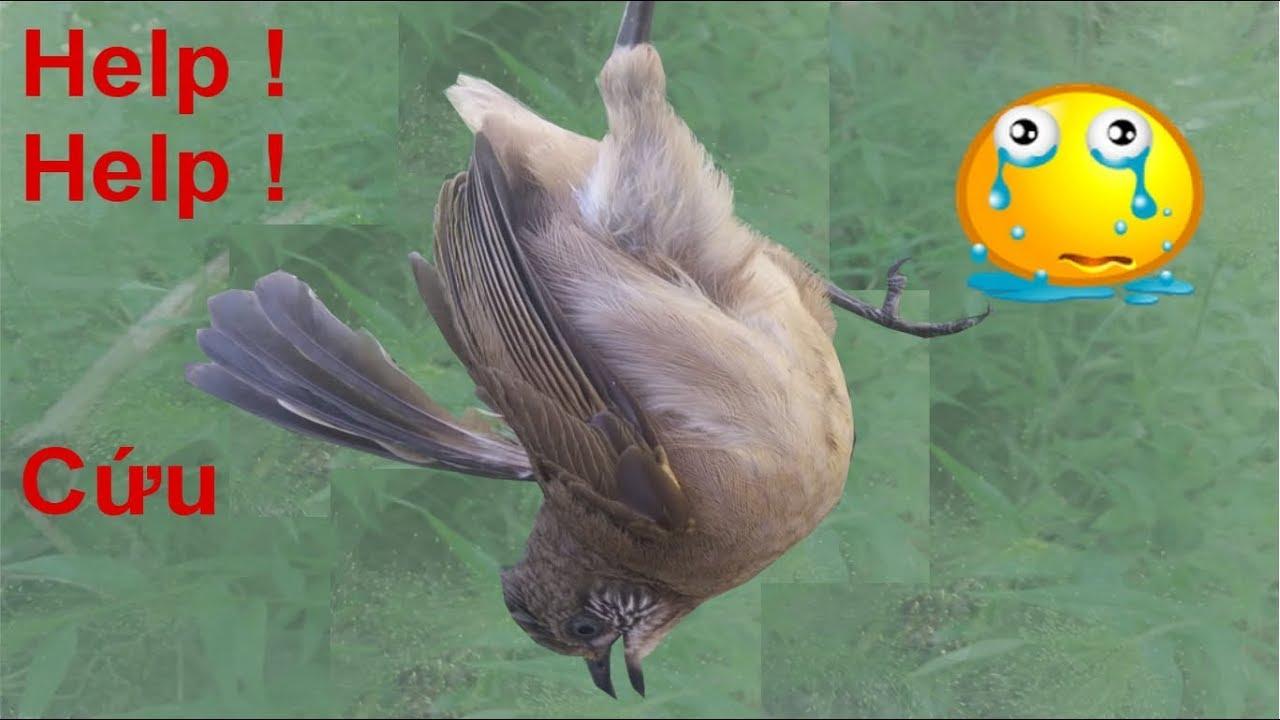 Kết quả hình ảnh cho chim gãy cánh