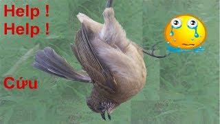 Giải Cứu Con Chim Quành Quạch Bị Súng Bắn Gãy Cánh Và Sự Thật Kinh Hoàng .Bird Broken Leg .awesome