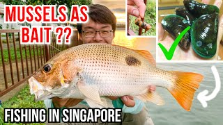 Using Mussels as Bait | Craziest Thing Happened... | Fishing in Singapore