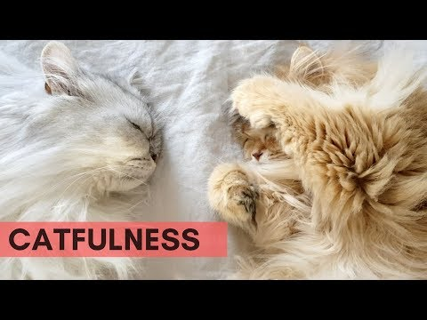 CATFULNESS #2 | WAKING UP WITH TWO FLUFF BALLS