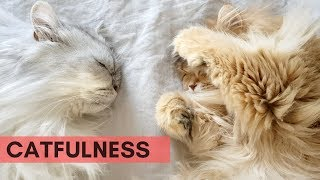 CATFULNESS #2   WAKING UP WITH TWO FLUFF BALLS