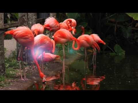 Flamingo Gardens- Welcome to Paradise