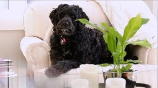 SickKids - Meet Moxie the pet therapy dog