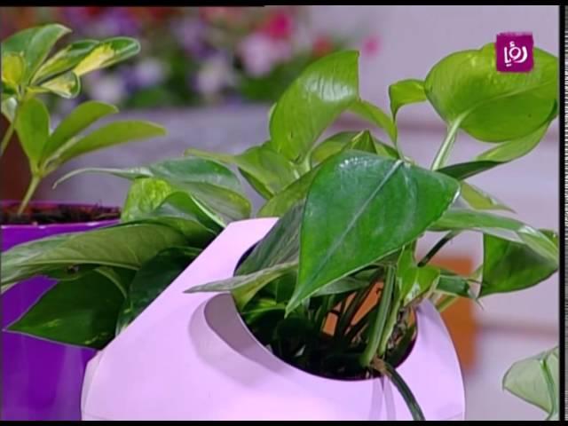 أنواع النباتات الداخلية سهلة العناية م أمل القيمري Youtube