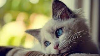 Download Что чувствуют кошки, когда их обижают ? Mp3 and Videos