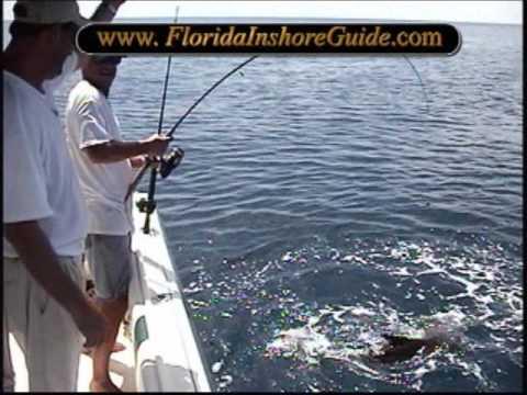 Tarpon redfish permit and big cobia sarasota florida for Where to get florida fishing license