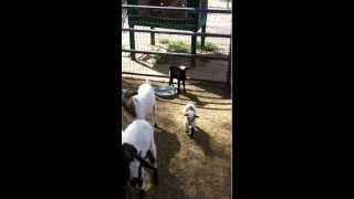 The Camel Farm and Wild World Zoo .. Yuma, AZ