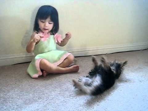 COCONUT yorkie and baby play dead high five tricks