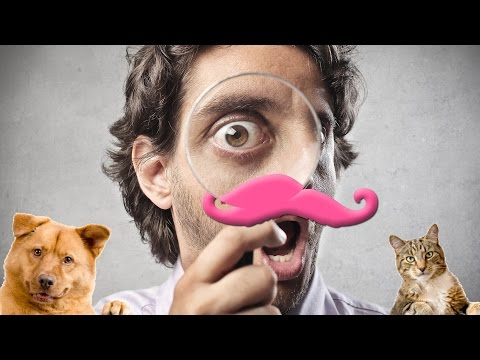 EXTERMINATE ALL ANIMALS?! | Animal Inspector