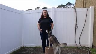 Teach Your Dog to Pivot in Place!