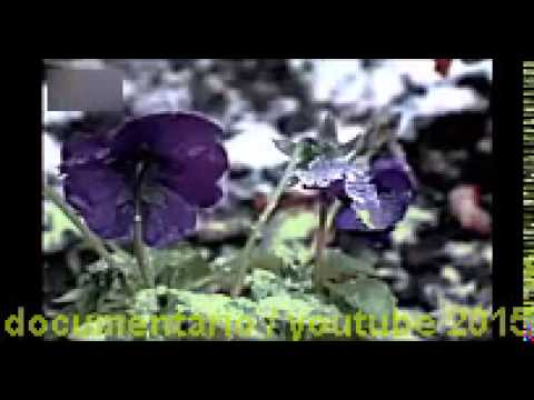 documentario sobre insetos