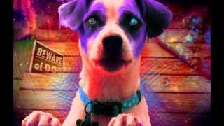 Sun Dog - Perpetual Groove